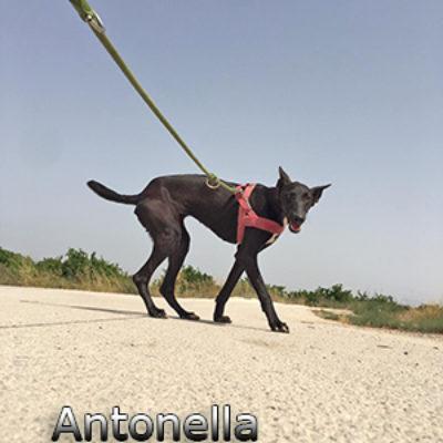 Antonella-(1)web