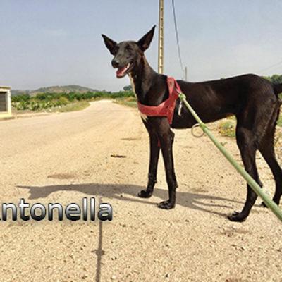 Antonella-(3)web
