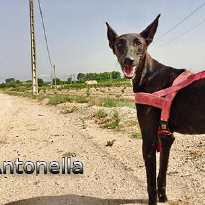Antonella-(5)web