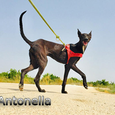 Antonella-(9)web
