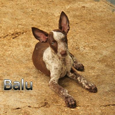Balu-(1)web