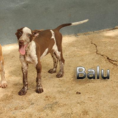Balu-(3)web
