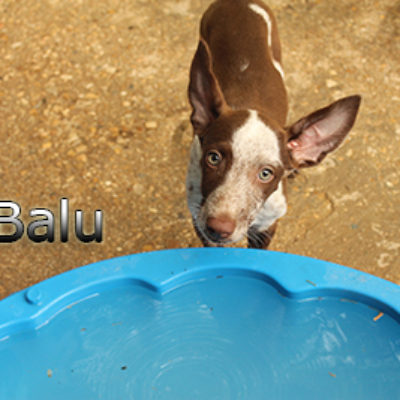 Balu-(4)web
