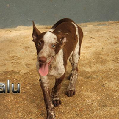 Balu-(5)web