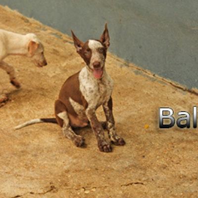 Balu-(6)web