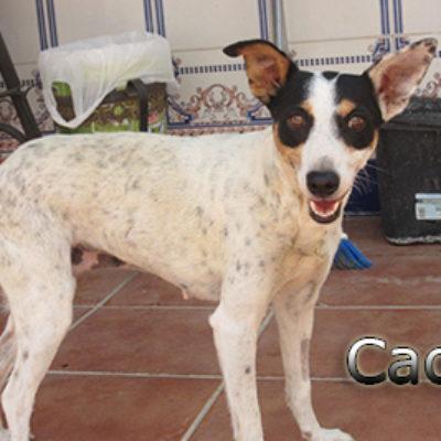 Caoba-(5)web