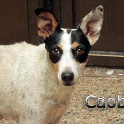 Caoba-(7)web