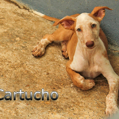 Cartucho-(1)web