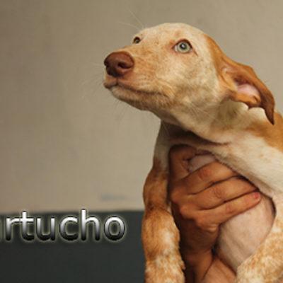 Cartucho-(2)web