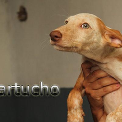 Cartucho-(3)web