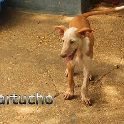 Cartucho-(4)web