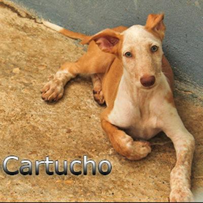 Cartucho-(5)web