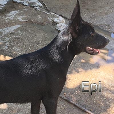 Epi_Update-(6)web