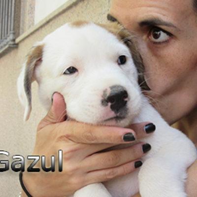 Gazul-(11)web