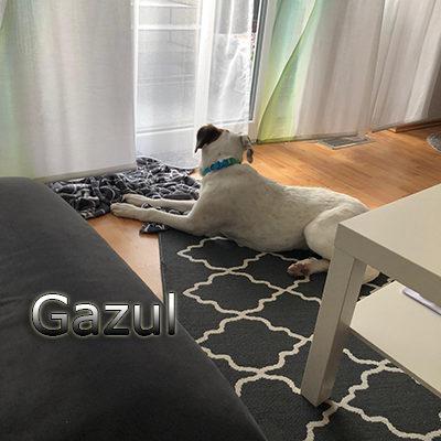 Gazul_Update_01122019-(4)web