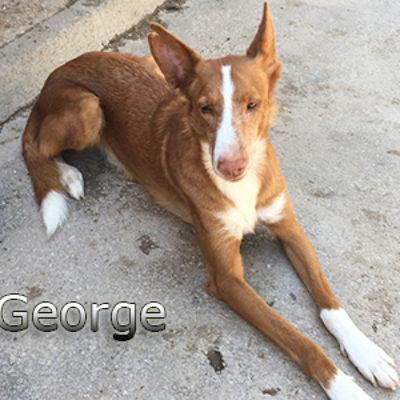 George-(17)web
