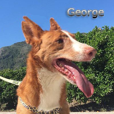 George-(1)web