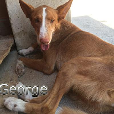 George-(7)web