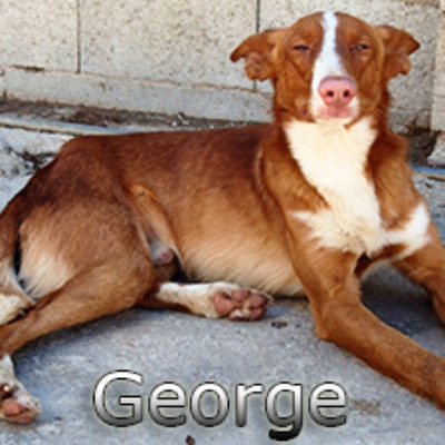 George-(8)web