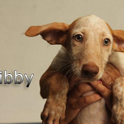 Libby-(3)web