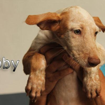 Libby-(4)web