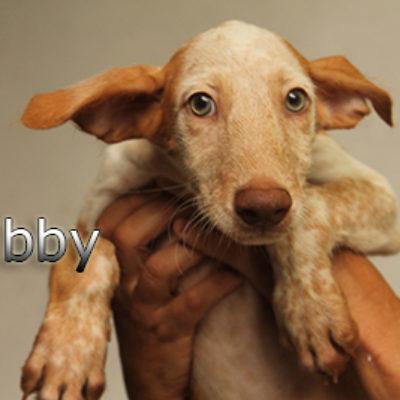 Libby-(5)web