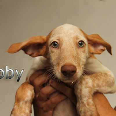 Libby-(6)web