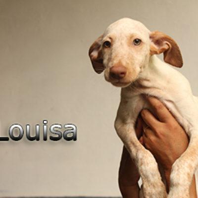 Louisa-(2)web