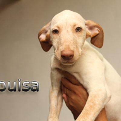 Louisa-(3)web