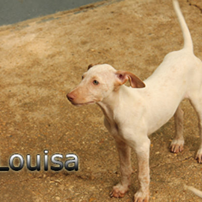Louisa-(4)web