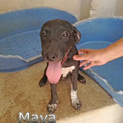 Maya-(1)web
