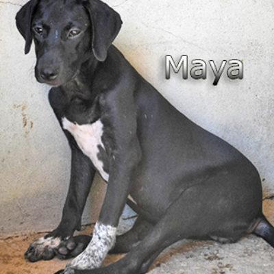 Maya_Update-(1)web