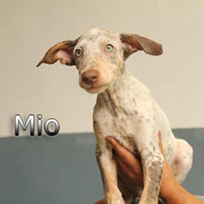 Mio-(3)web