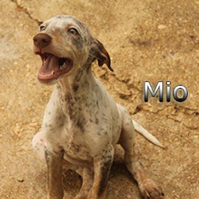 Mio-(4)web