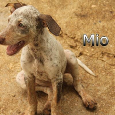 Mio-(5)web