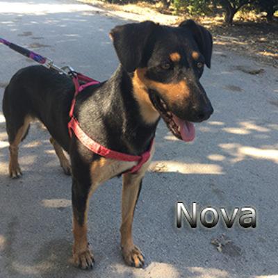 Nova-(7)web