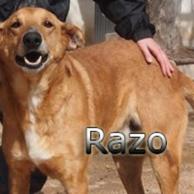 Razo-(2)web