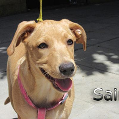Saira-(11)web