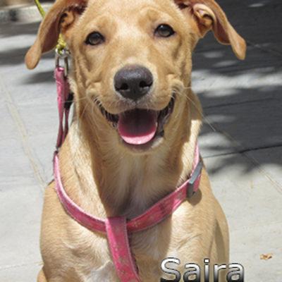 Saira-(12)web