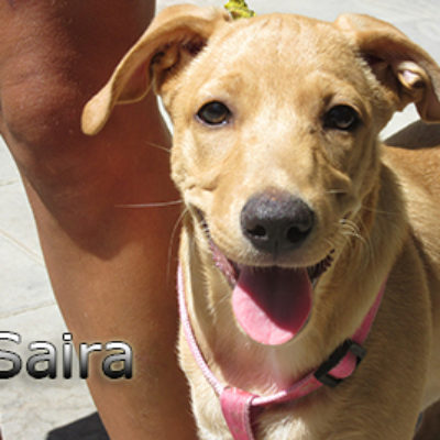Saira-(13)web