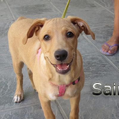 Saira-(2)web
