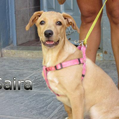 Saira-(6)web