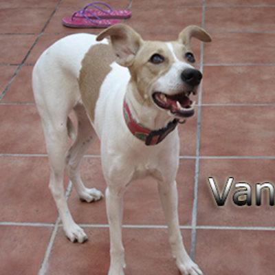 Vanda-(11)web