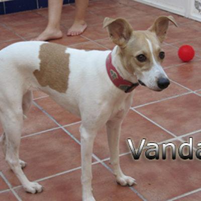 Vanda-(12)web