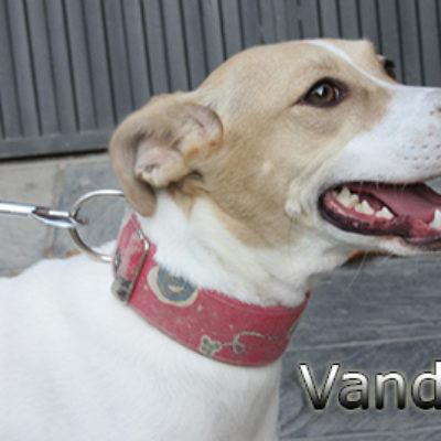Vanda-(2)web
