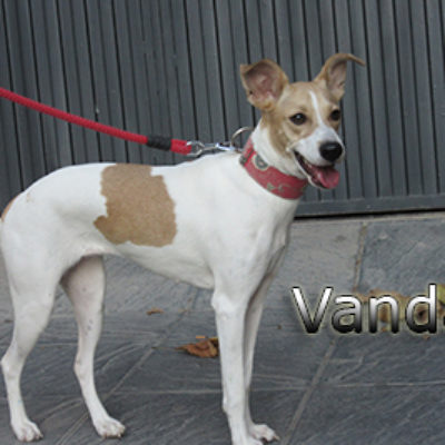 Vanda-(3)web