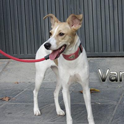 Vanda-(4)web