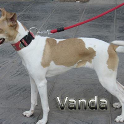 Vanda-(6)web