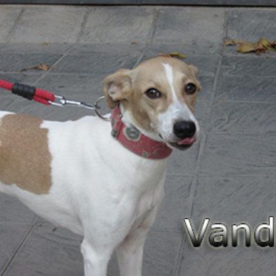 Vanda-(7)web