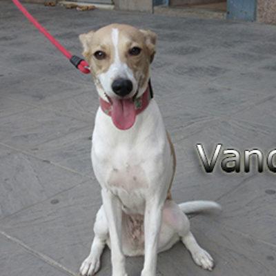 Vanda-(8)web
